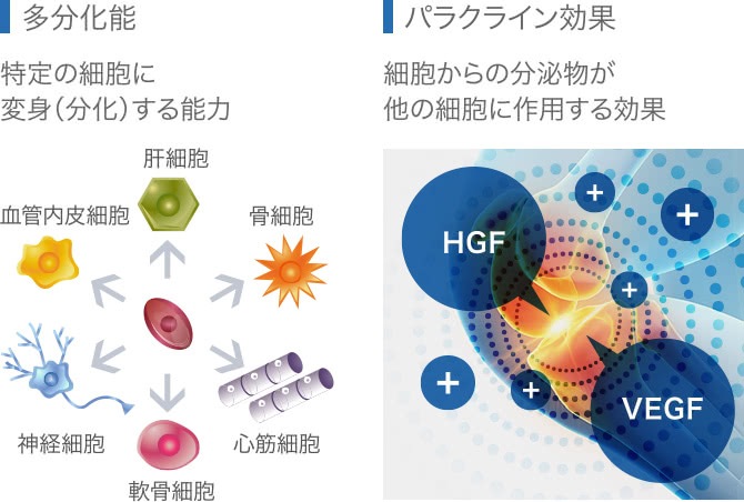 幹細胞治療の効果